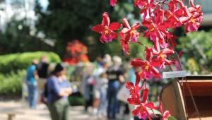 Orchids show